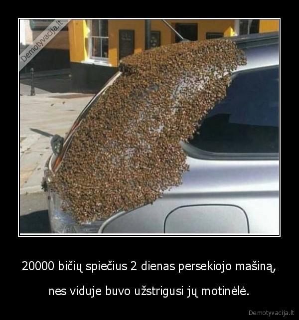 20000 bičių spiečius 2 dienas persekiojo mašiną,..