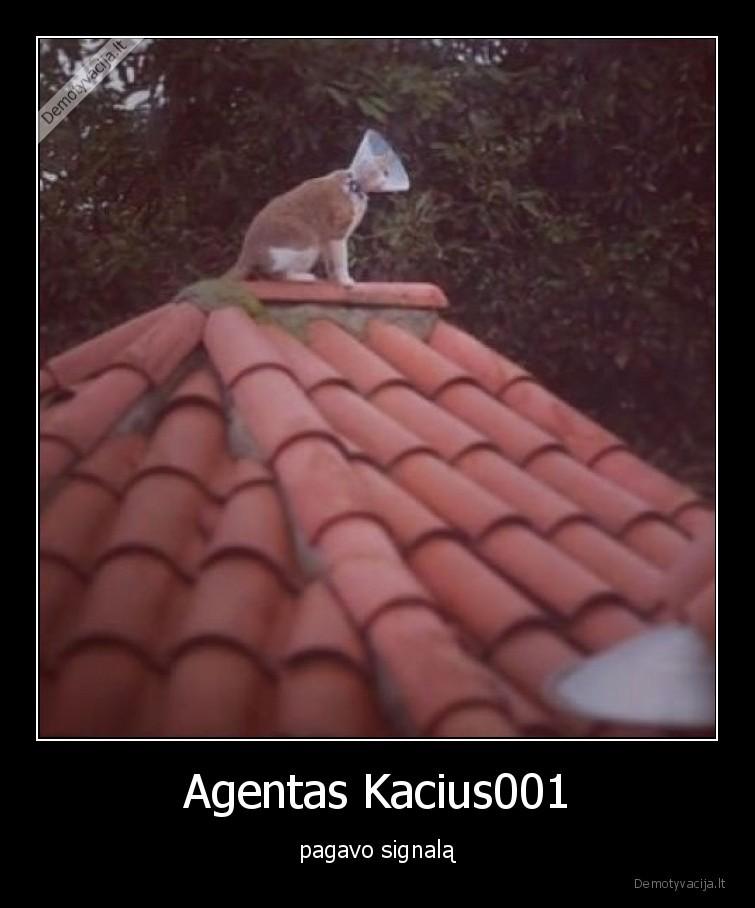 Agentas Kacius001 pagavo signala