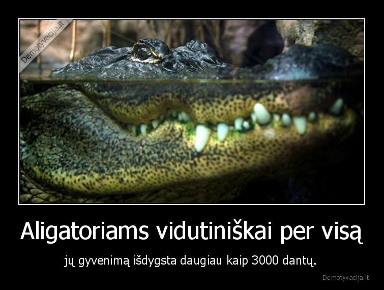 Aligatoriams vidutiniskai per visa ju gyvenima isdygsta daugiau kaip 3000 dantu