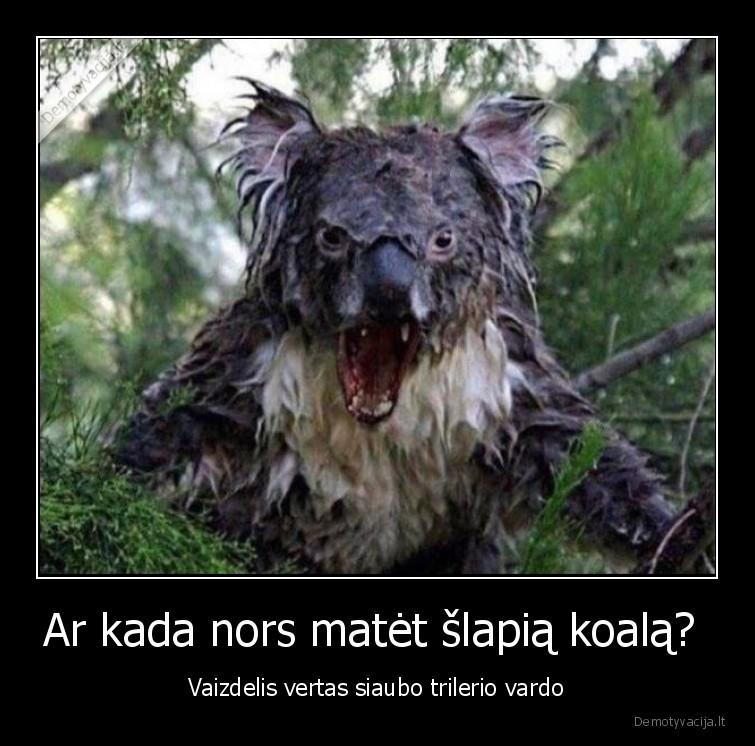 Ar kada nors matet slapia koala Vaizdelis vertas siaubo trilerio vardo