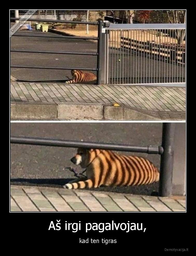 As irgi pagalvojau kad ten tigras