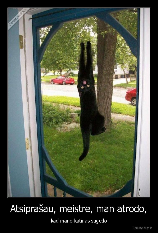 Atsiprasau meistre man atrodo kad mano katinas sugedo