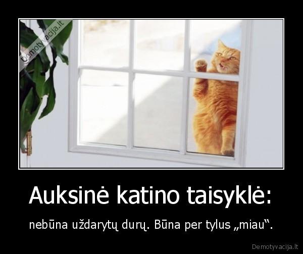 Auksine katino taisykle nebuna uzdarytu duru. Buna per tylus miau