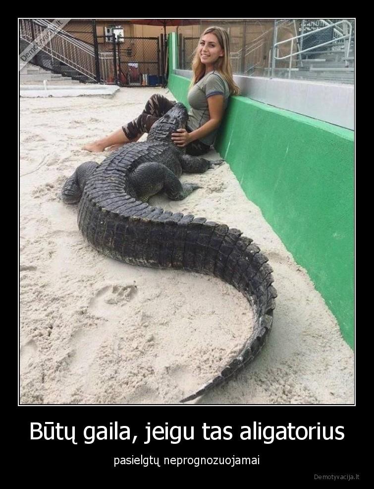 Butu gaila jeigu tas aligatorius pasielgtu neprognozuojamai