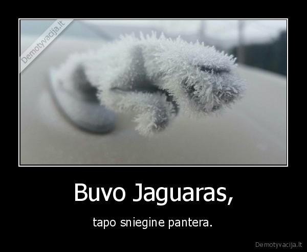Buvo Jaguaras tapo sniegine pantera