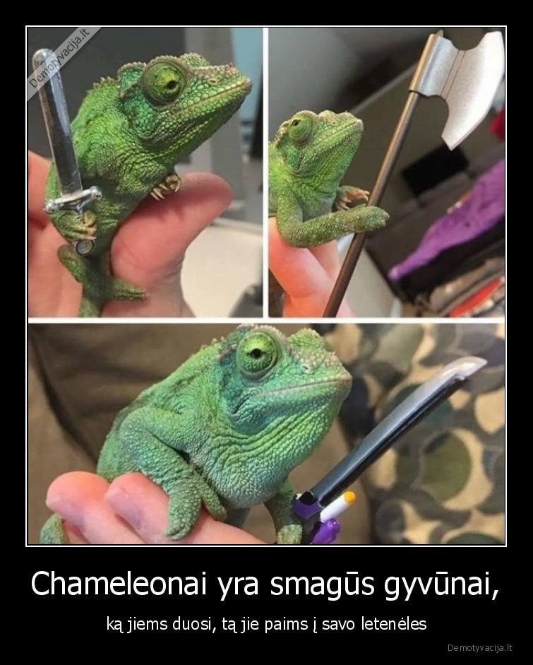 Chameleonai yra smagus gyvunai ka jiems duosi ta jie paims i savo leteneles
