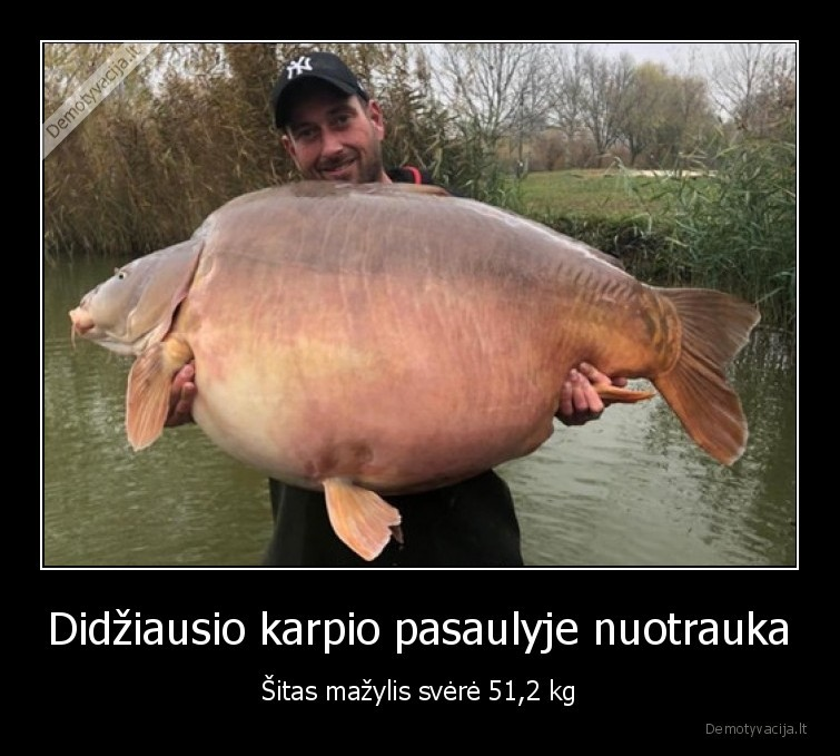 Didziausio karpio pasaulyje nuotrauka sitas mazylis svere 512 kg