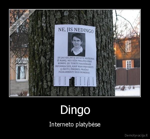 Dingo Interneto platybese