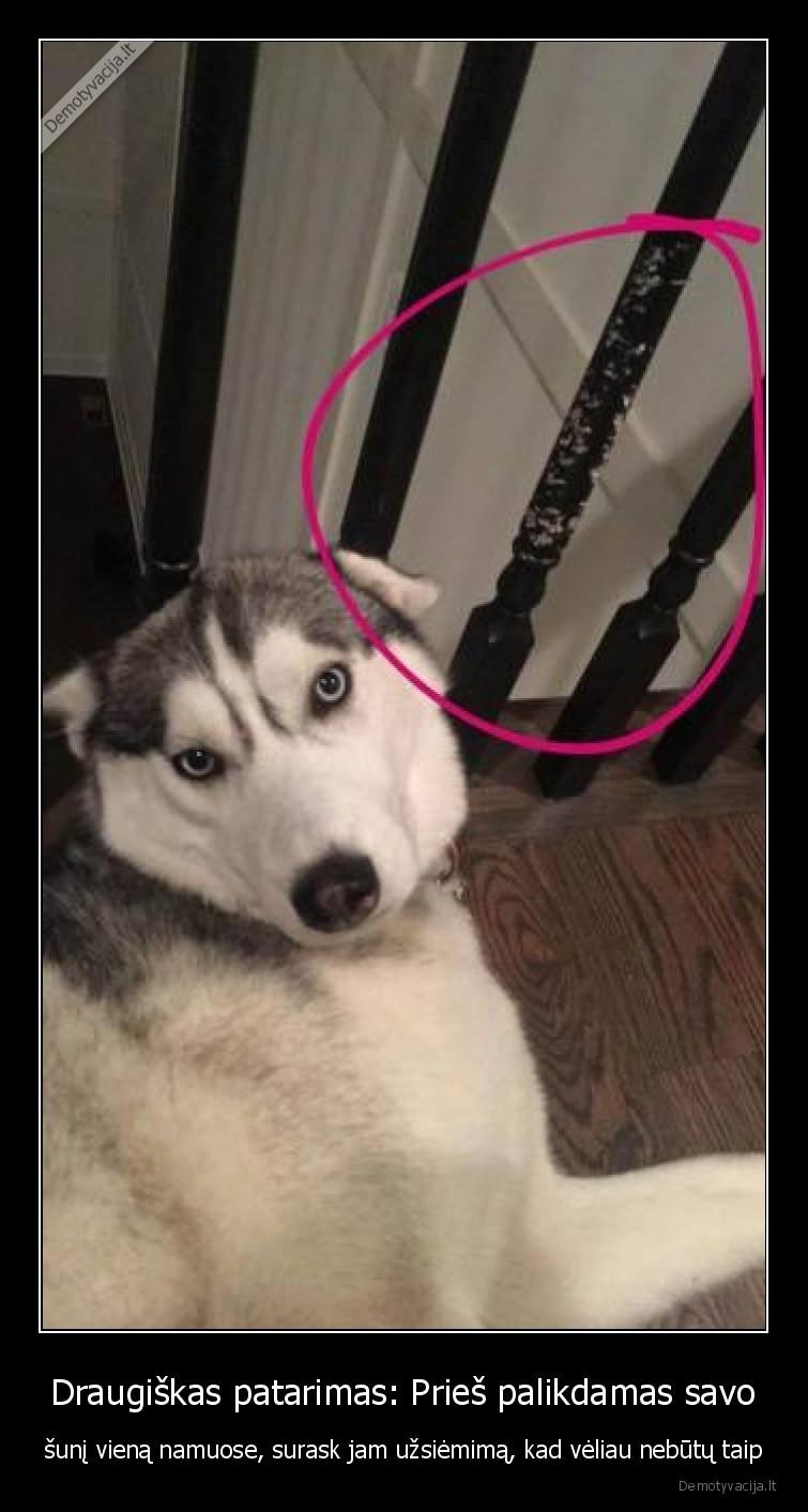 Draugiskas patarimas Pries palikdamas savo suni viena namuose surask jam uzsiemima kad veliau nebutu taip