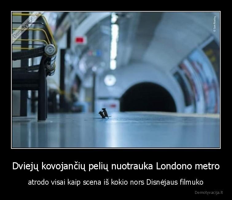 Dvieju kovojanciu peliu nuotrauka Londono metro atrodo visai kaip scena is kokio nors Disnejaus filmuko