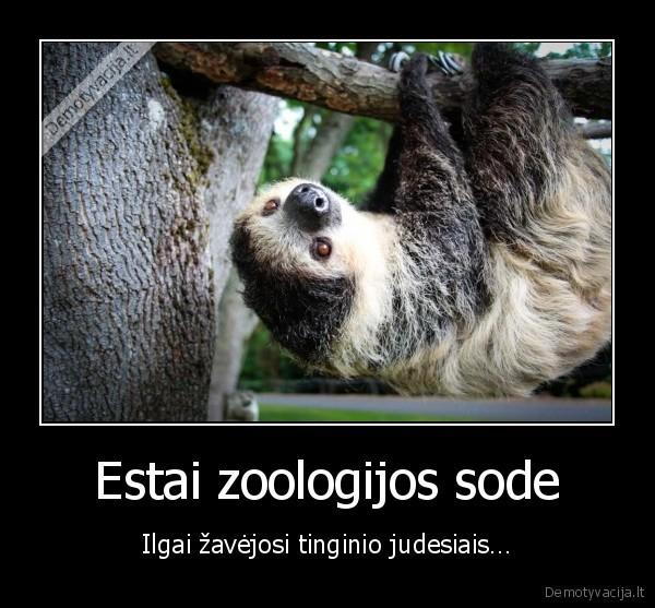 Estai zoologijos sode Ilgai zavejosi tinginio judesiais