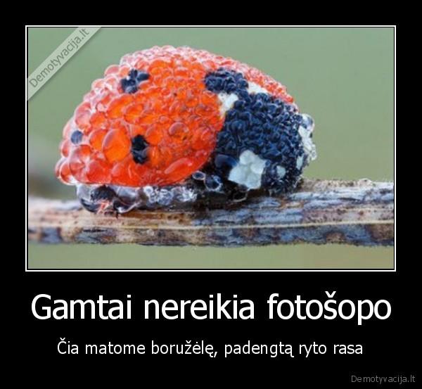 Gamtai nereikia fotosopo cia matome boruzele padengta ryto rasa