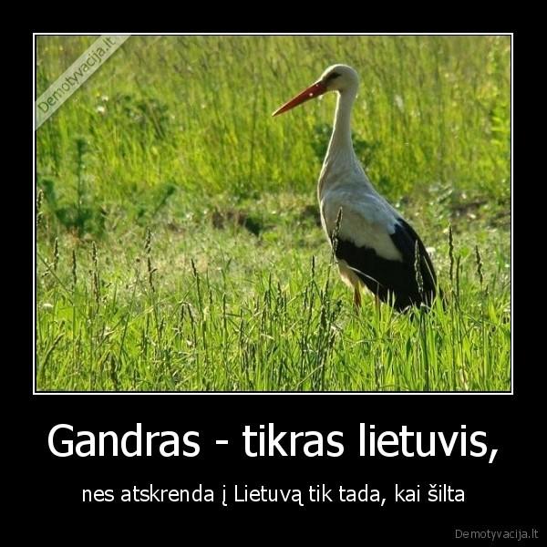 Gandras tikras lietuvis nes atskrenda i Lietuva tik tada kai silta