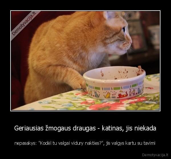 Geriausias zmogaus draugas katinas jis niekada nepasakys Kodel tu valgai vidury nakties jis valgys kartu su tavimi