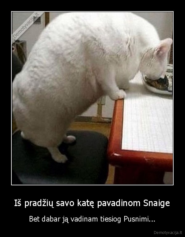 Is pradziu savo kate pavadinom Snaige Bet dabar ja vadinam tiesiog Pusnimi