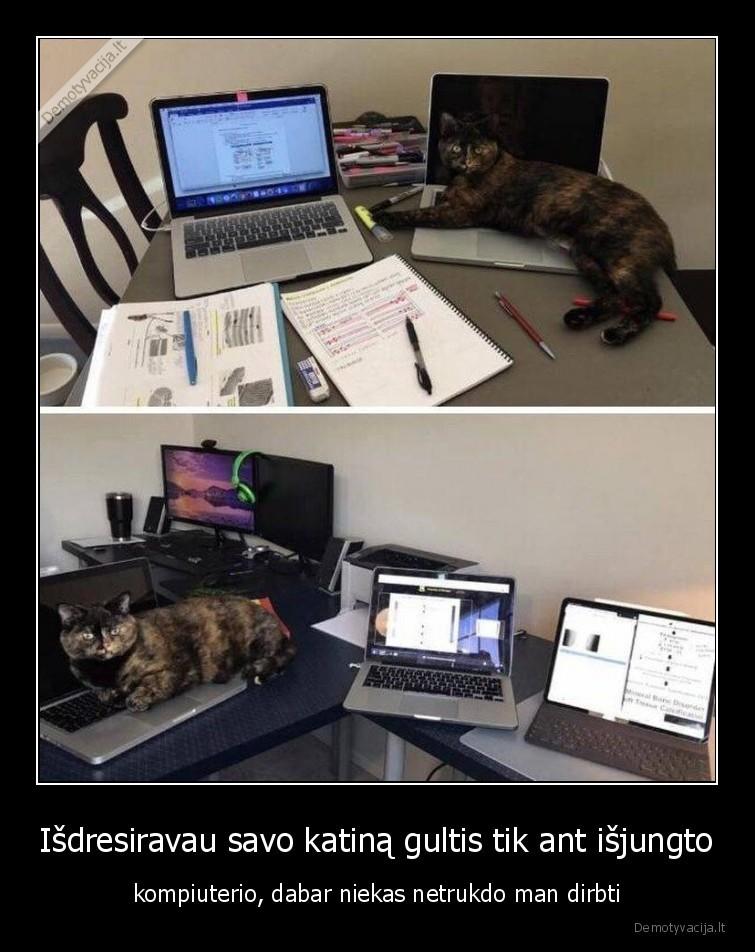 Isdresiravau savo katina gultis tik ant isjungto kompiuterio dabar niekas netrukdo man dirbti