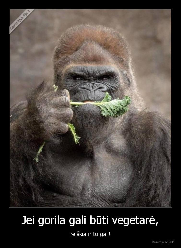 Jei gorila gali buti vegetare reiskia ir tu gali