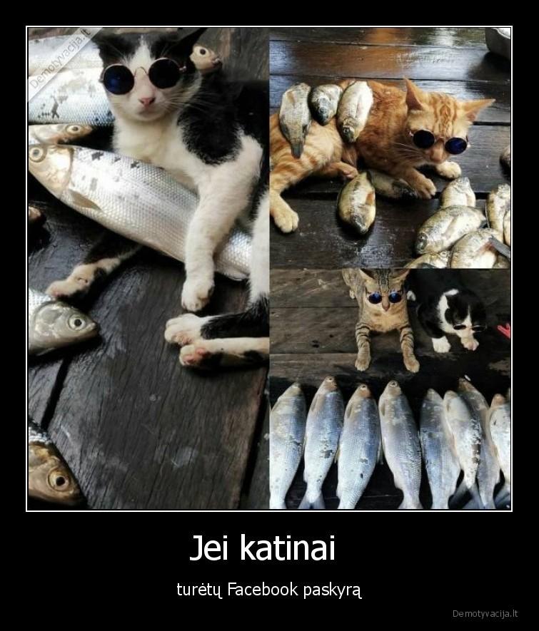 Jei katinai turetu Facebook paskyra