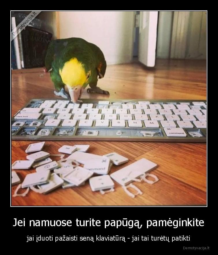 Jei namuose turite papuga pameginkite jai iduoti pazaisti sena klaviatura jai tai turetu patikti