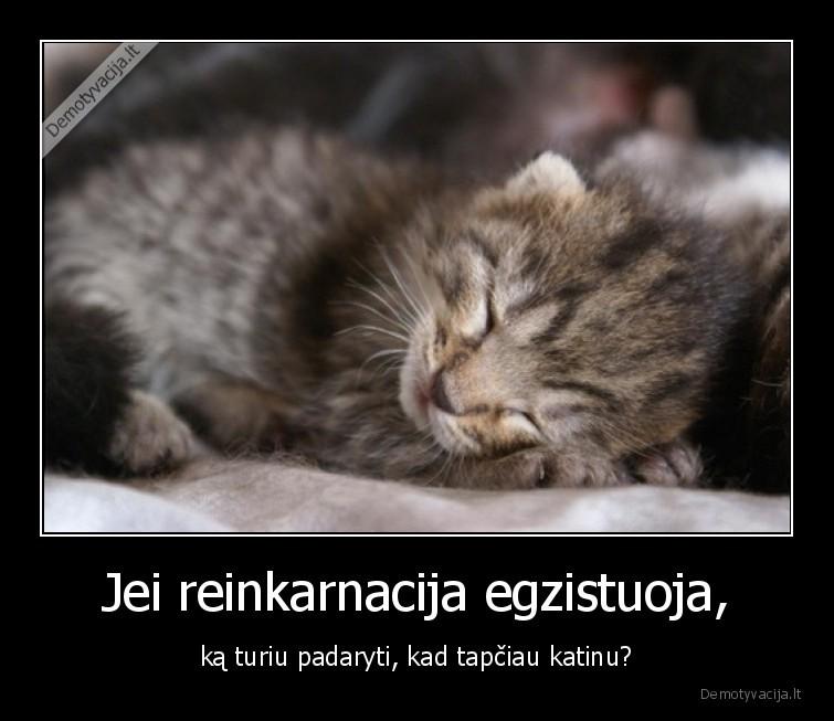 Jei reinkarnacija egzistuoja ka turiu padaryti kad tapciau katinu
