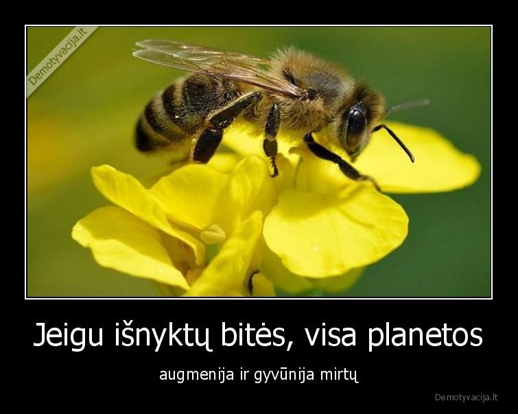 Jeigu isnyktu bites visa planetos augmenija ir gyvunija mirtu