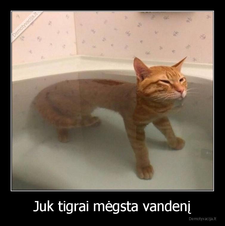 Juk tigrai megsta vandeni