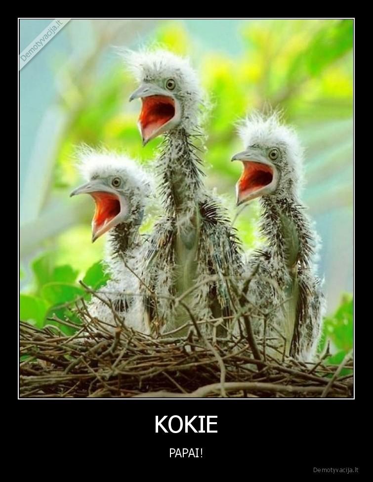 KOKIE PAPAI