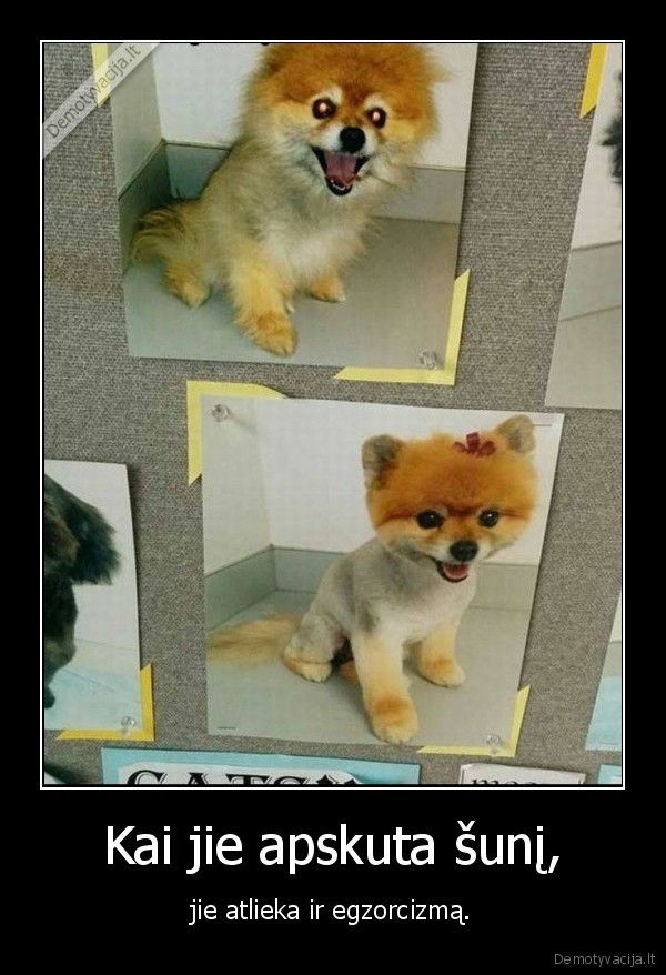 Kai jie apskuta suni jie atlieka ir egzorcizma