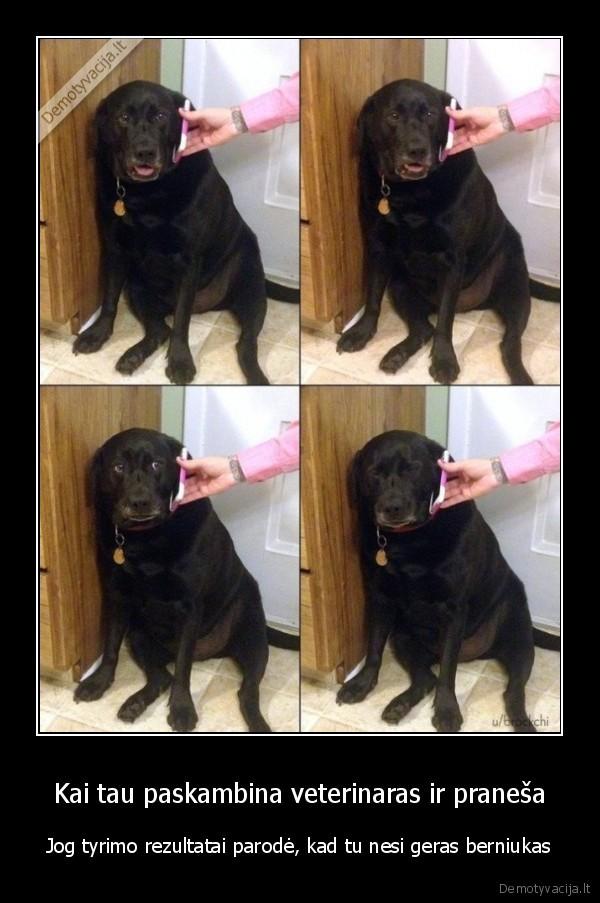 Kai tau paskambina veterinaras ir pranesa Jog tyrimo rezultatai parode kad tu nesi geras berniukas