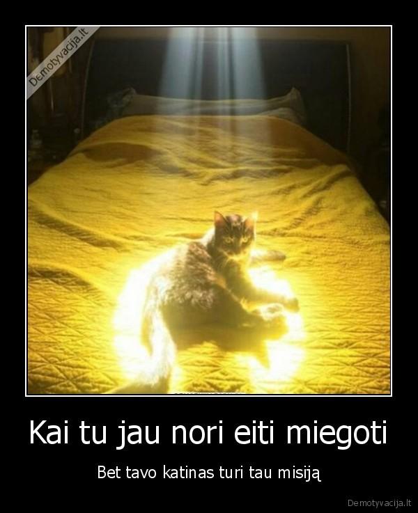Kai tu jau nori eiti miegoti Bet tavo katinas turi tau misija