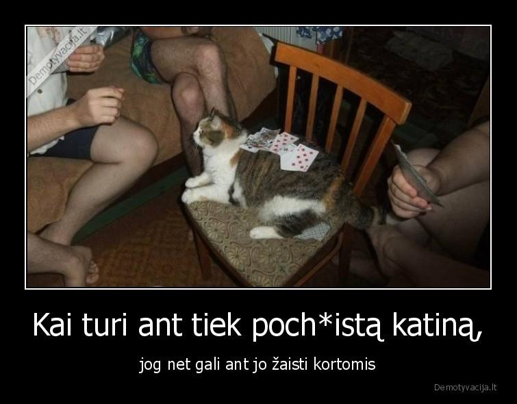 Kai turi ant tiek pochista katina jog net gali ant jo zaisti kortomis