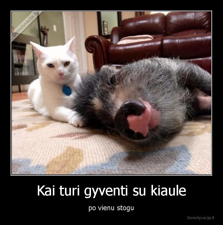 Kai turi gyventi su kiaule po vienu stogu