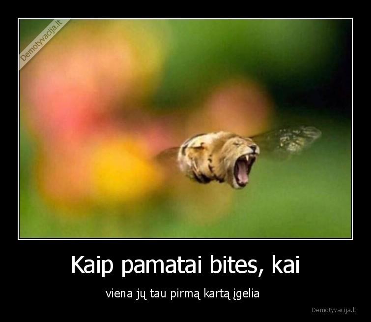 Kaip pamatai bites kai viena ju tau pirma karta igelia