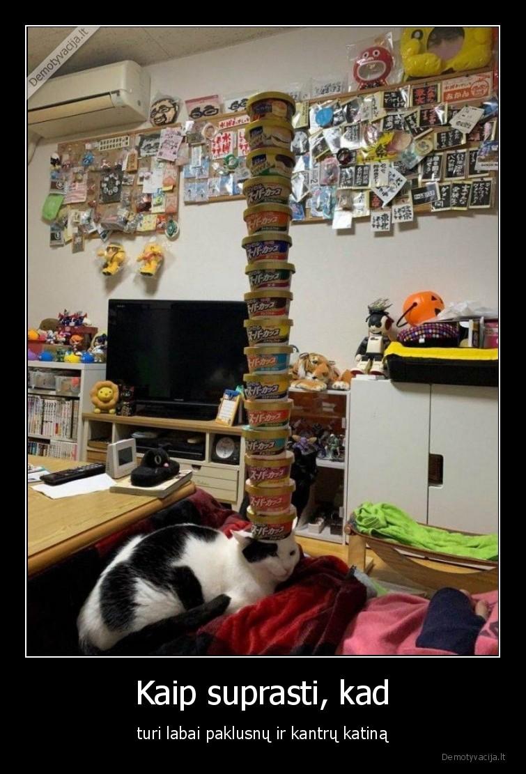 Kaip suprasti kad turi labai paklusnu ir kantru katina