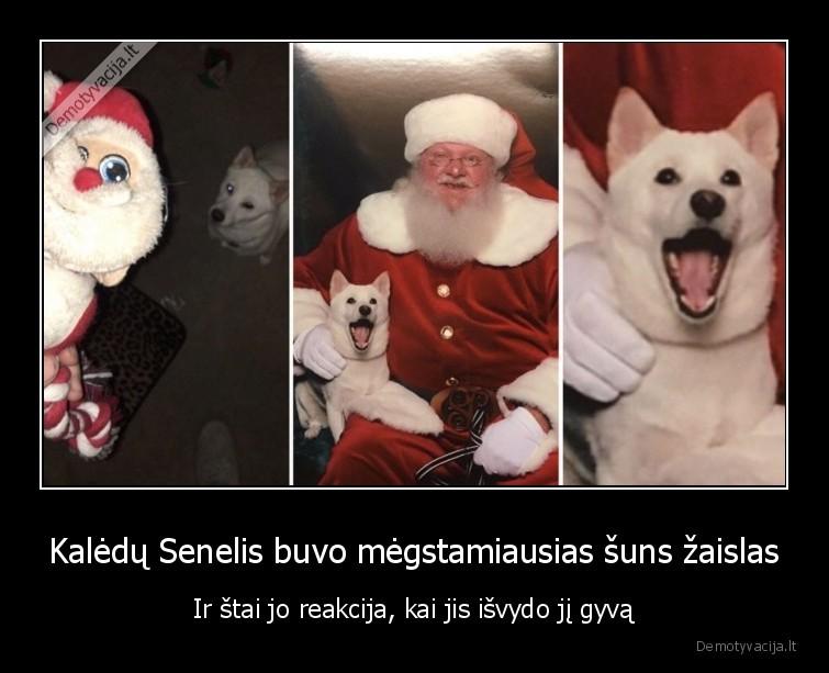 Kaledu Senelis buvo megstamiausias suns zaislas Ir stai jo reakcija kai jis isvydo ji gyva