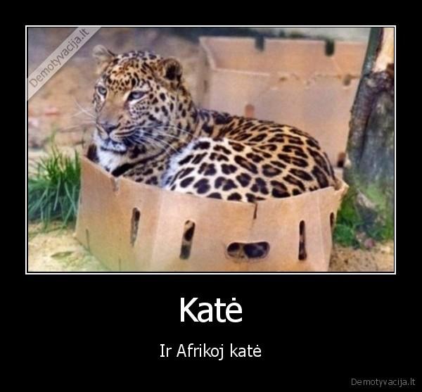 Kate Ir Afrikoj kate