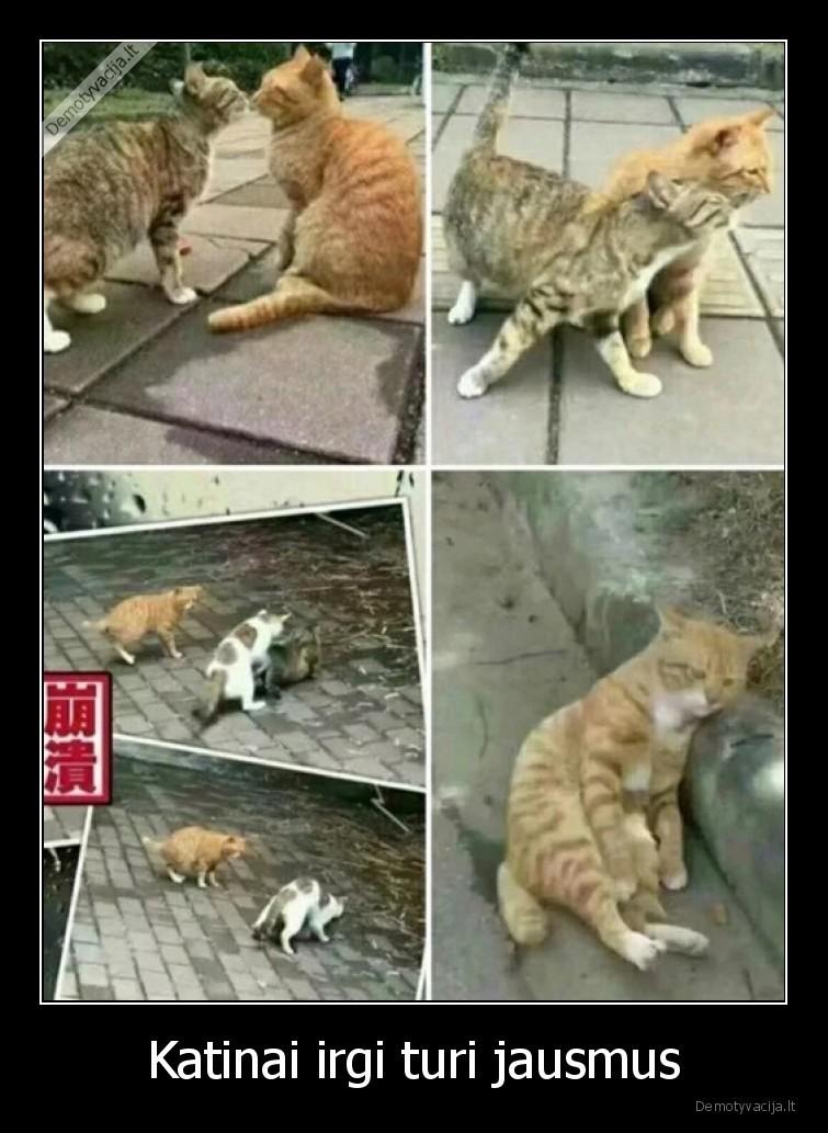 Katinai irgi turi jausmus