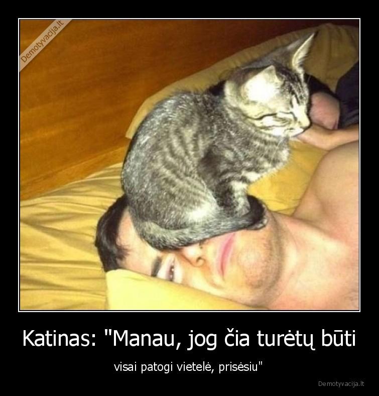 Katinas Manau jog cia turetu buti visai patogi vietele prisesiu