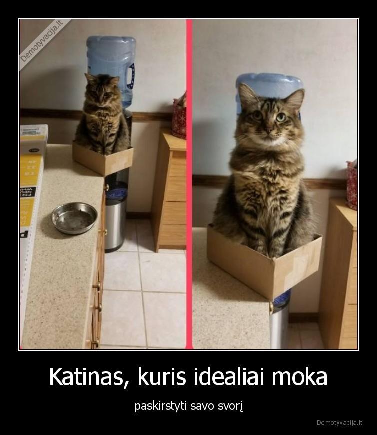 Katinas kuris idealiai moka paskirstyti savo svori