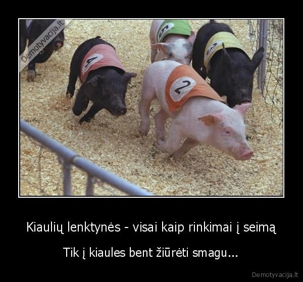 Kiauliu lenktynes visai kaip rinkimai i seima Tik i kiaules bent ziureti smagu