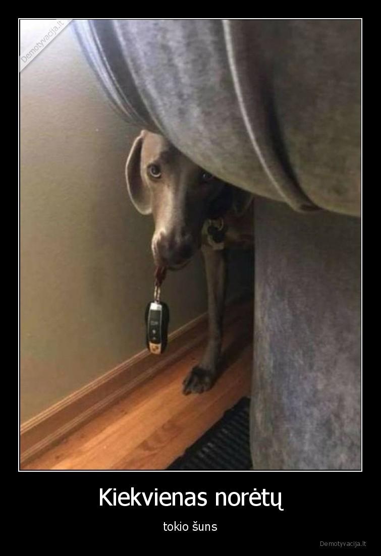 Kiekvienas noretu tokio suns
