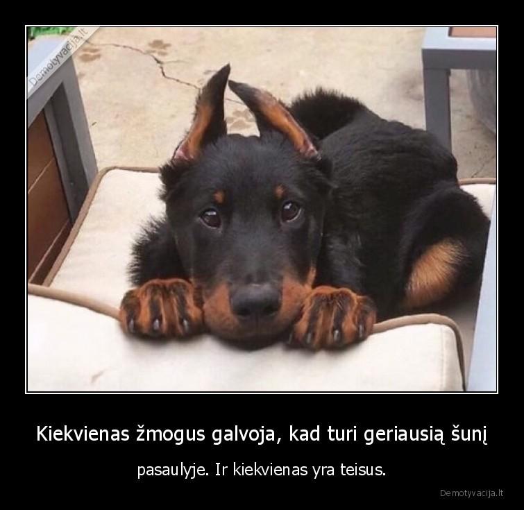 Kiekvienas zmogus galvoja kad turi geriausia suni pasaulyje. Ir kiekvienas yra teisus