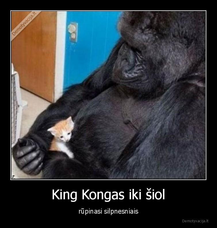 King Kongas iki siol rupinasi silpnesniais
