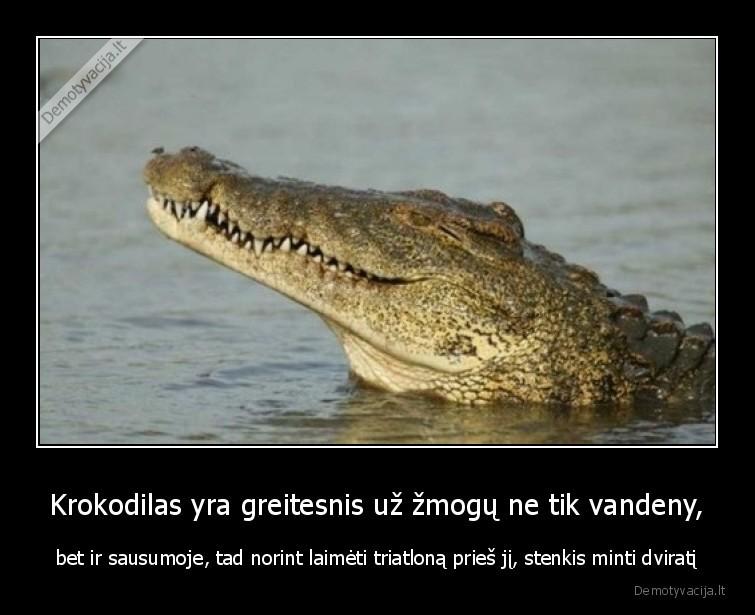Krokodilas yra greitesnis uz zmogu ne tik vandeny bet ir sausumoje tad norint laimeti triatlona pries ji stenkis minti dvirati