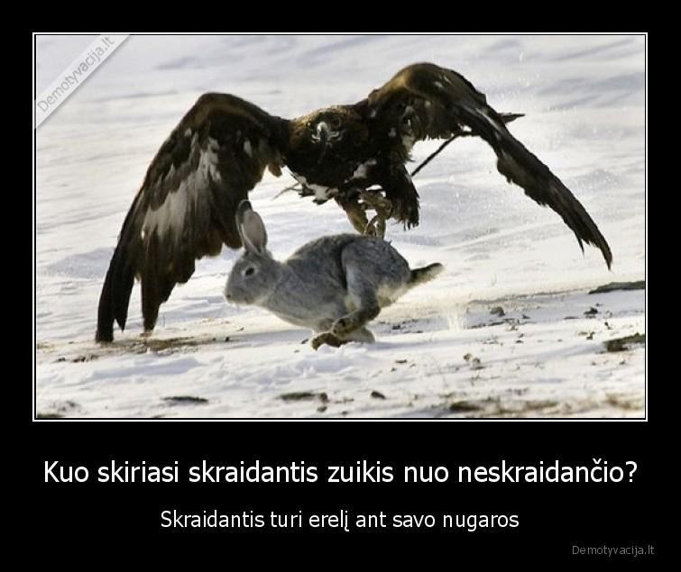 Kuo skiriasi skraidantis zuikis nuo neskraidancio Skraidantis turi ereli ant savo nugaros