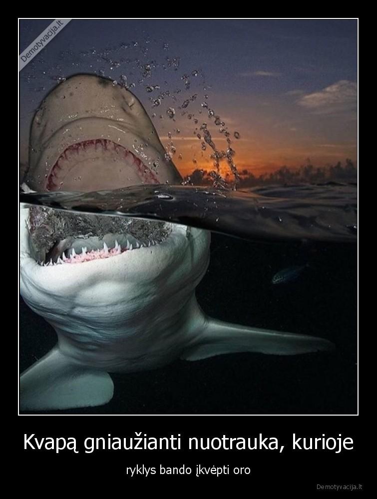 Kvapa gniauzianti nuotrauka kurioje ryklys bando ikvepti oro