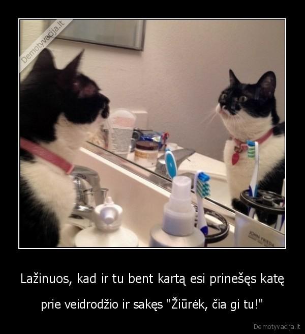 Lazinuos kad ir tu bent karta esi prineses kate prie veidrodzio ir sakes ziurek cia gi tu