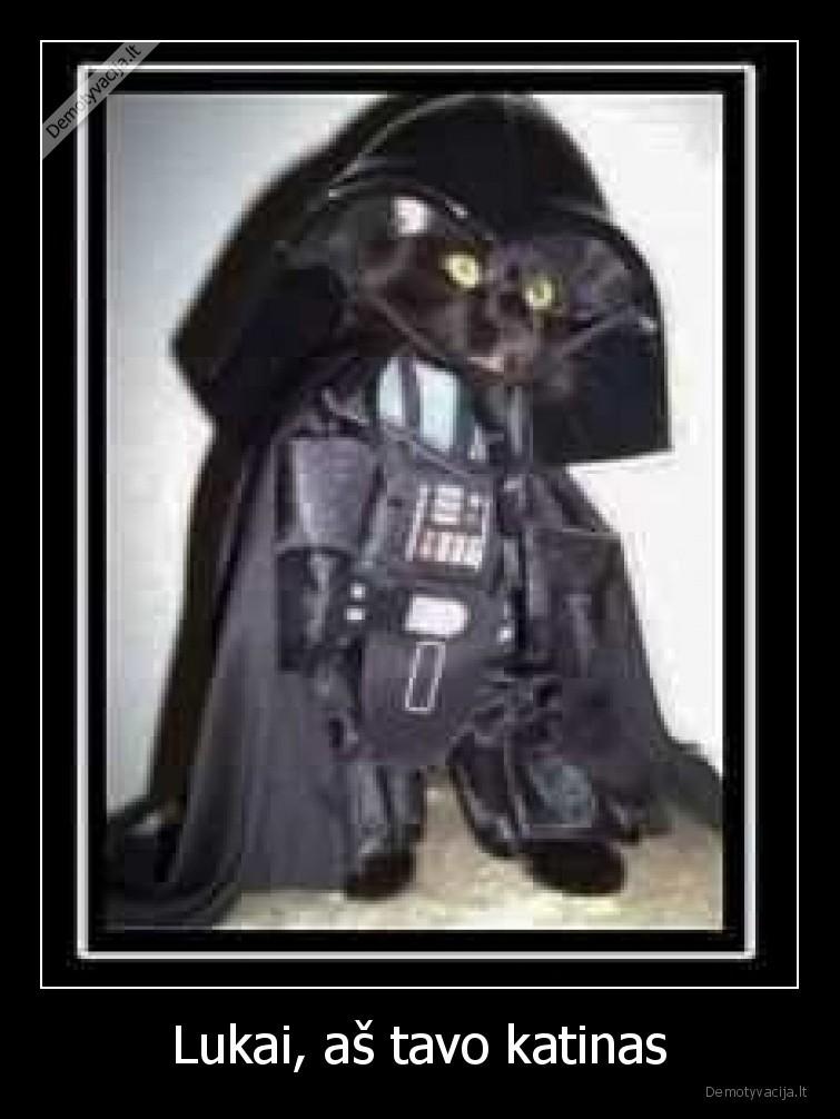 Lukai as tavo katinas