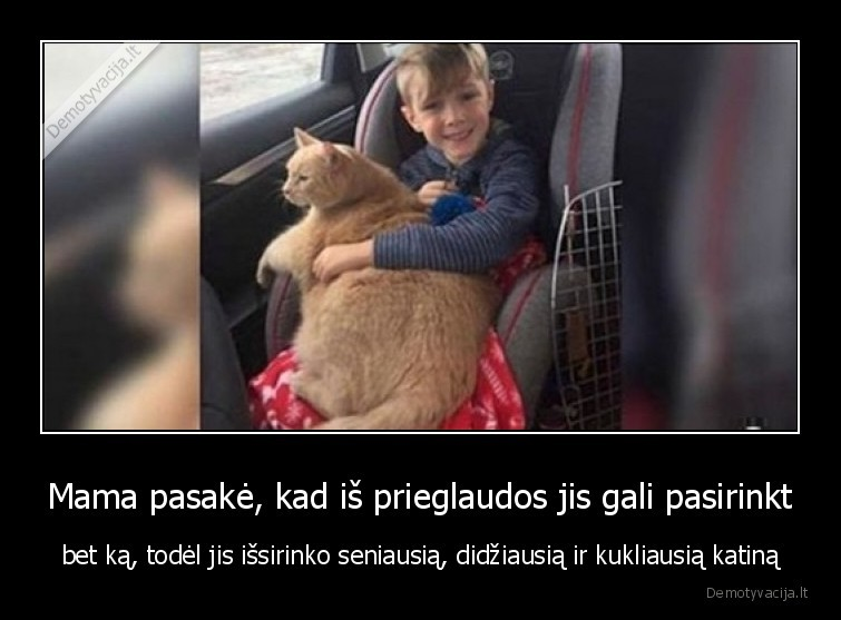 Mama pasake kad is prieglaudos jis gali pasirinkt bet ka todel jis issirinko seniausia didziausia ir kukliausia katina