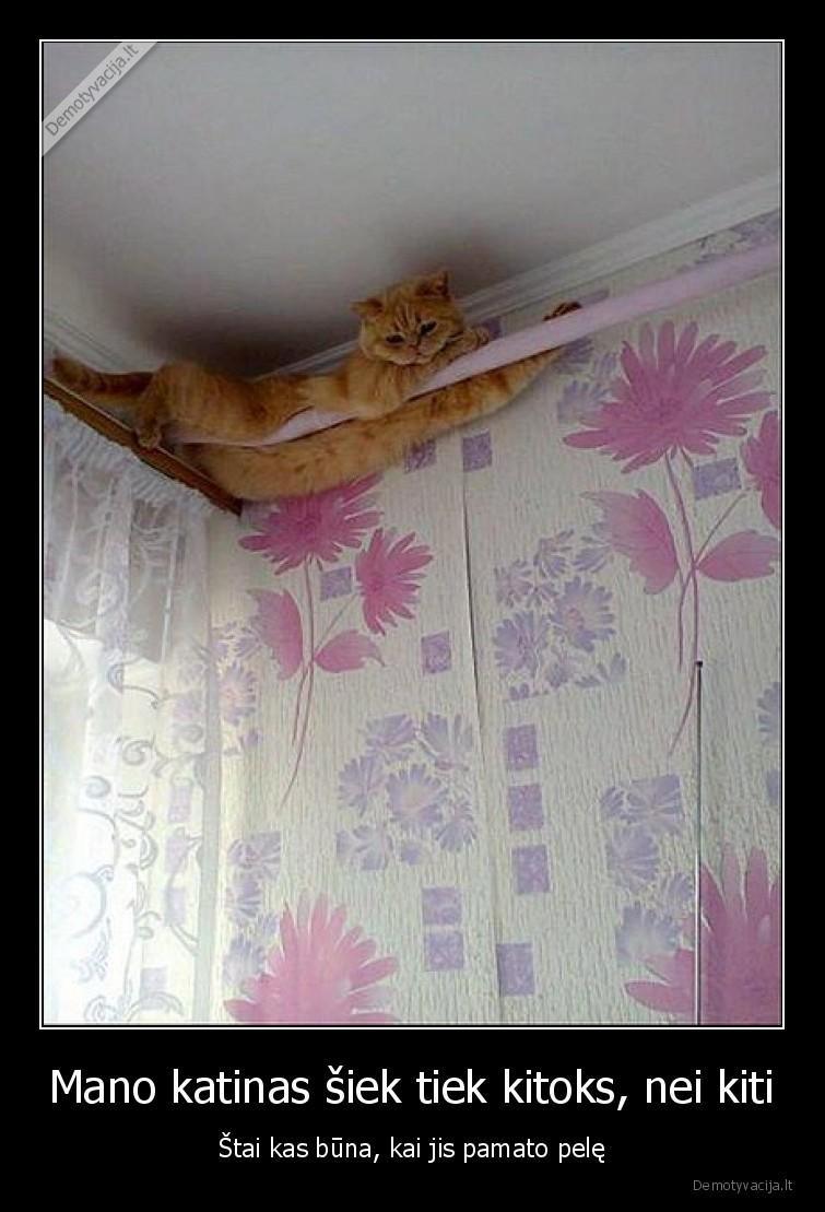 Mano katinas siek tiek kitoks nei kiti stai kas buna kai jis pamato pele